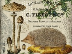 Hedgehog and Parasols Postcard