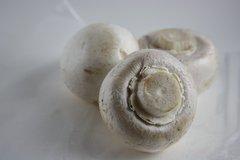 White Button Mushroom Fruiting Kit