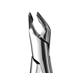 APICAL FORCEPS #151