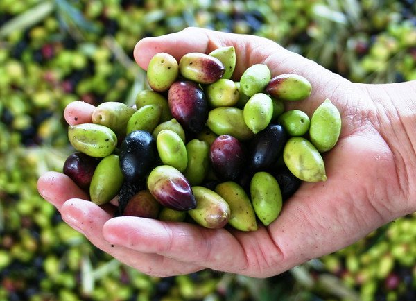 Health benefits of olive oil and balsamic vinegar   Heart Of