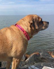 Dog Collar Medium