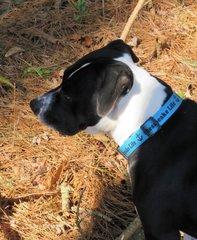 Dog Collar Large