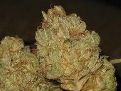 Weed For Sale UK : Stardawg Weed For Sale