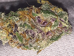 Grand Daddy Purple Grade A (Indica) : Grand Daddy Purple For Sale