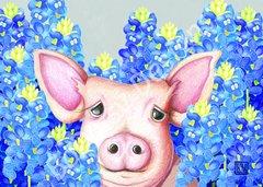 Bluebonnet Pig