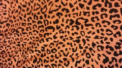 Orange Cheetah - cotton
