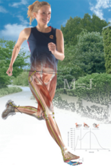 Getting Your Gait Straight - 3 Hour LIVE WEBINAR - February 22, 2018 6pm - 9pm EST
