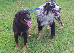 Two Way, Three Way Dog Lead Leash 2 ply USA Tough 3/4
