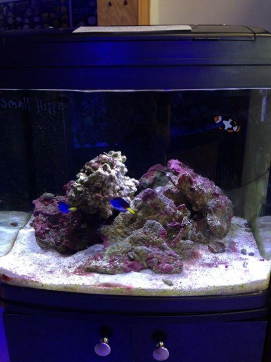 Aquarium Maintenance & Services, Fish tank cleaning,Jupiter