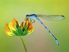 Kiara's Dragonfly Lotion