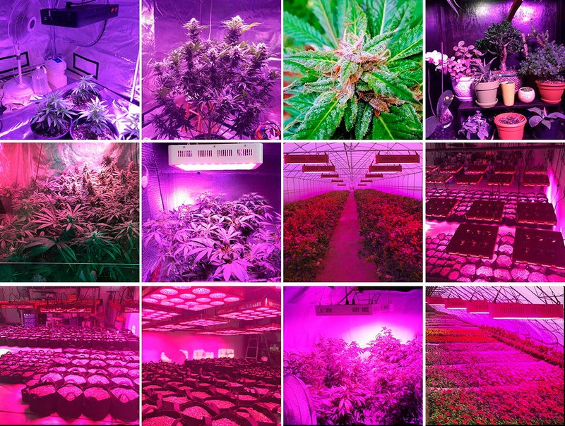 BESTVA 1000W Double Chips LED Grow Light Full Spectrum Grow Lamp for  Greenhouse Hydroponic Indoor Plants Veg and Flower