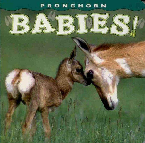 Pronghorn Babies!