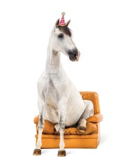 "Birthday Card: Horse just ""Chillin'"" in Chair - Item # Horse/Chair"
