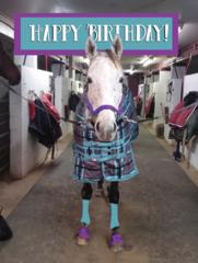Birthday Card: Happy Birthday (Horse in a plaid blanket) Item # GC B A Bit