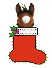Christmas Card: Foal popping out of a Christmas Stocking - Item # GC X Foal