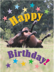 Equine birthday cards horse hollow press birthday card happy birthday item gc rolling bookmarktalkfo Images
