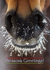 Christmas Card: Horse with Frosty Muzzle   - Item# GC X Frosty