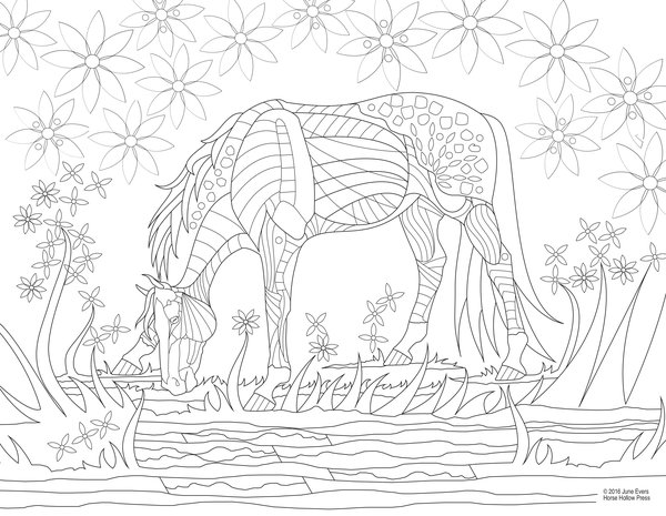 Adult horse coloring books - Horse Hollow Press