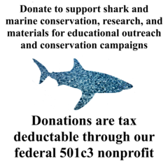 Donate to our Nonprofit for shark and marine research and conservation and educational outreach