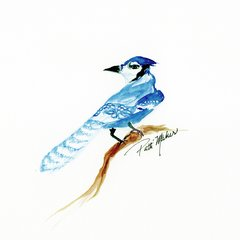 Bluejay Giclee Reproduction