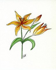 Tiger Lily Notecards (set of 8)