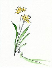 Daffodils Notecards (set of 8)