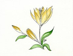 Day Lily Notecards (set of 8)