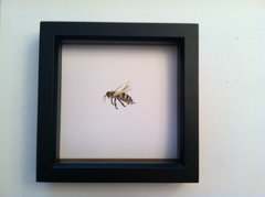 Bee Giclee Reproduction in Shadow Box frame