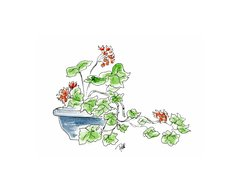 Potted Geranium Notecards (set of 8)