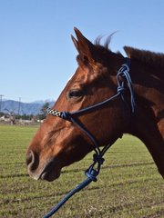 Kensington rope halter with lead