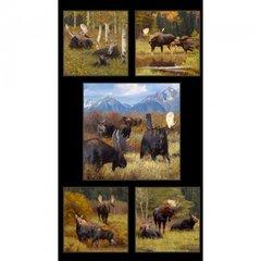 PN-Moose Panel