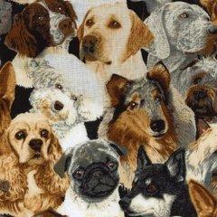 F - Beautiful Dogs