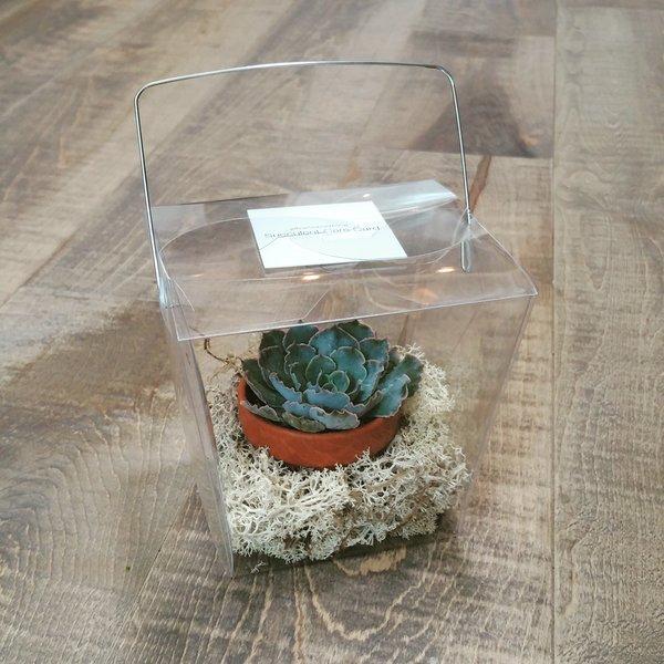 Succulent to Go