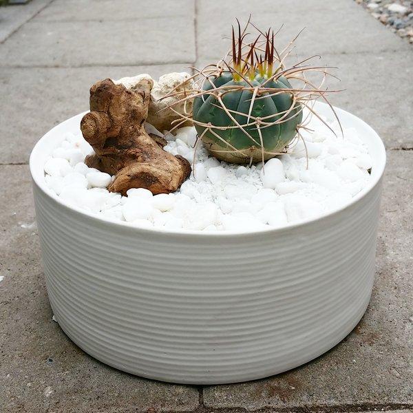 Rare Cactus Arrangement