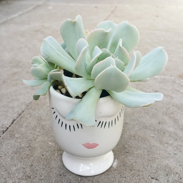 Head Planter Arrangement - Topsy Turvy