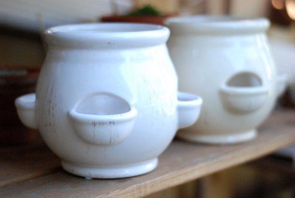 Herb Pot