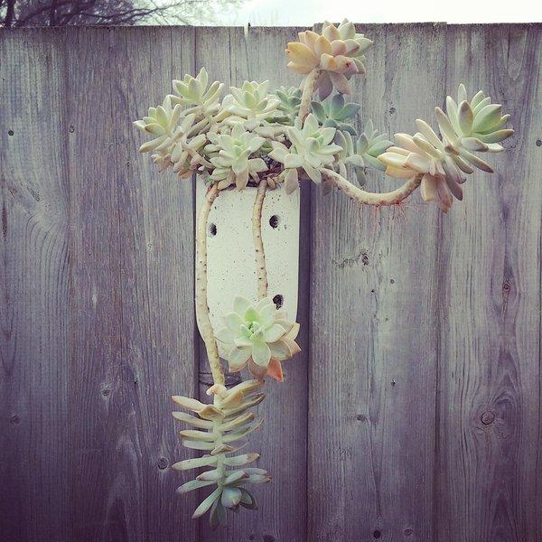Native Planter Arrangement - Ghost Plant