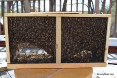 3# Packaged Bees /Queen