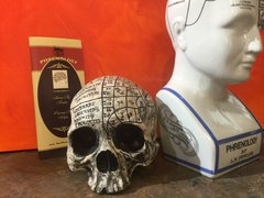Phrenology Skull Replica