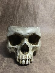 Skull Bowl - Male - Food Safe - Skull chalice