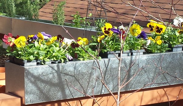 railing world over deck wonders planter of charleston self hanging customer into their one gardens back rail transformed watering the this planters pin ancient