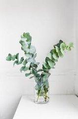 BATH BOMB Eucalyptus