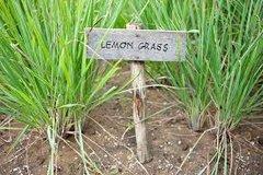 BATH BOMB Lemon Grass