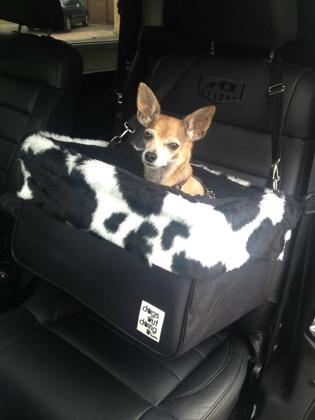 Large Dogs Out Doing Car Booster Seat - B & W Cow lining*   Dog Car ...