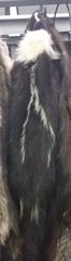 skunk pelt