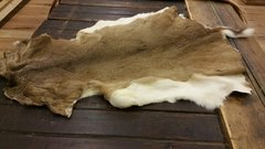 white tail deer / deer hide/ deer rug