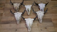 Rustic Western Style Bull Buffalo Skull bison skull Z-3