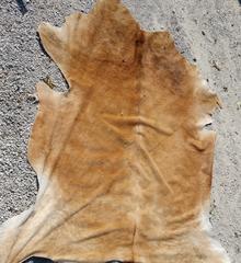 tan / buckskin color cow hide
