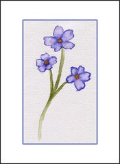 Periwinkle Flower Study - Watercolor