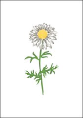 Daisy Note Card